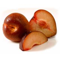 Гибрид слива-абрикос Плумкот (ІАБ-59)