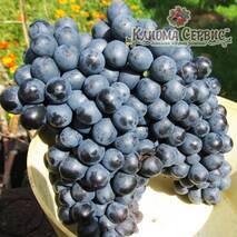Саженцы винограда сорт Красень