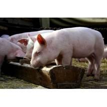 Комбікорм для свиней (гровер)