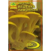 Міцелій гриба Вешенки лимонної, 10 гр