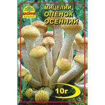 Міцелій гриба Опеньок осінній, 10 гр