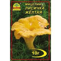 Міцелій гриба Лисички жовтої, 10 гр