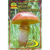 Міцелій гриба Маслюк звичайний, 10 гр