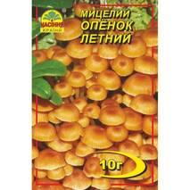 Міцелій гриба Опеньок літній, 10 гр