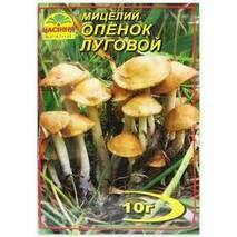 Міцелій гриба Опеньок луговий, 10 гр