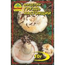 Міцелій гриба Груздь справжній, 10 гр