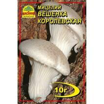 Міцелій гриба Вешенки королівської, 10 гр