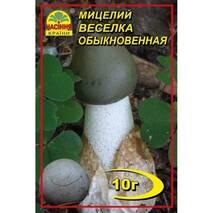 Міцелій  гриба Веселка, 10 гр