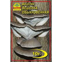 Міцелій  гриба Вешенки звичайної, 10 гр