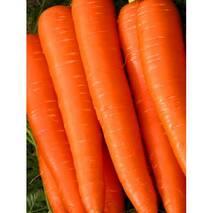 Морковь Витаминная за 2 г