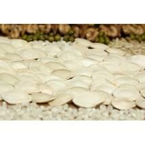 Тыквенные семена в мешках по 25 кг