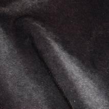 Нерпа сірий