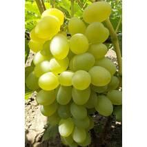 Виноград Єлизавета (ОКН-2618) за 2-4 л