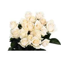 Саджанці троянд Вендела