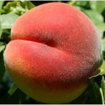 Саджанці персика Кондор