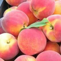 Саджанці персика Кардинал