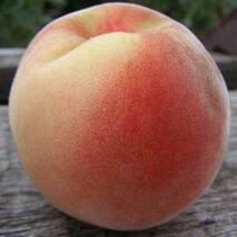 Саджанці персика Білий Лебедєва