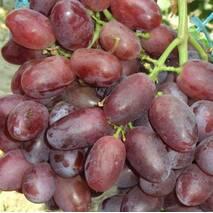 Саджанці винограду сорт Стела