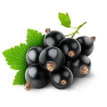 МАСЛО КОСТОЧКИ ЧОРНОЙ СМОРОДИНЫ (Blackcurrant oil refined)