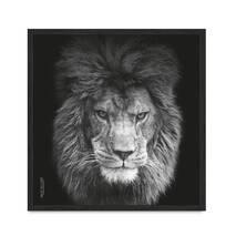 """Постер """"Lion vol 5"""". без скла 30 x 30 см в чорній  рамці"""