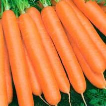 Морковь Вовка-морковка за 20 г (ЕМР-75)