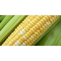 Кукурудза цукрова Біколор (ЕКК-53А) за 200 нас.