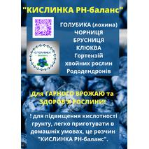 Саджанці лохини Торо 1-2-3 річні ГАРНИЙ СМАК