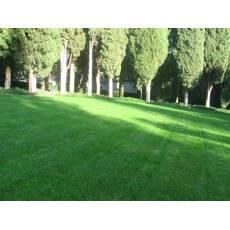 Універсальний газон