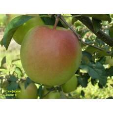 Яблуня Скіфське Золото