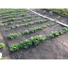 Агроволокно черное 50% 1.6 метра