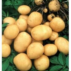 Картопля Гранада сетка 3 кг