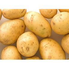 Картофель семенной первой репродукции