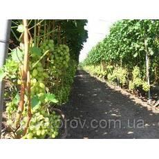 Опори і шпалери для витких рослин Polyarm