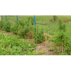 Опоры, стволы, колья, палки для подвязки растений Polyarm