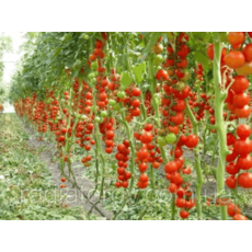 Опори/стволи для підв'язки рослин, дерев, саджанців Polyarm