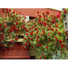 Опори для плетистих троянд і кущових рослин Polyarm