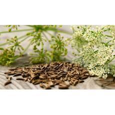 Экстракт семян тмина купить в Украине