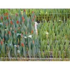 Сетка обойная (цветочная) белая (1 м х 50 м)