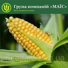 Насіння кукурудзи Здобуток від МАЇС (Черкасы)