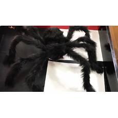 Паук бархатный большой