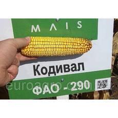 Насіння кукурудзи Кодивал від МАЇС (Черкасы)