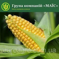 Насіння кукурудзи LG 30360 від МАЇС (Черкасы)