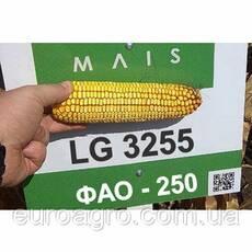 Насіння кукурудзи LG 3255 від МАЇС (Черкасы)