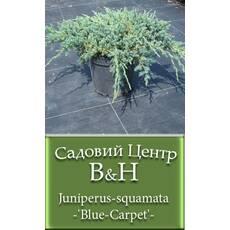 Ялівець лускатий низькорослий Блю Карпет (Juniperus squamata Blue Carpet)