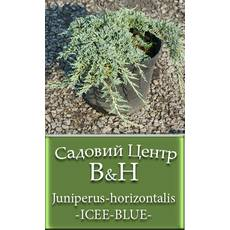 Ялівець горизонтальный Айс Блю (Juniperus horizontalis ICEE BLUE)