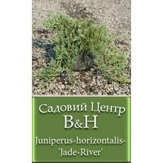 Ялівець горизонтальний Джейд Рівер (Juniperus horizontalis Jade River)