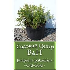 Ялівець середній Олд Голд (Juniperus pfitzeriana Old Gold)