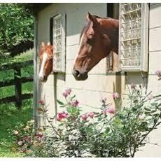 Окна для конюшни.