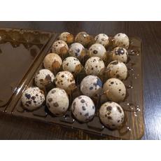 Харчове яйце