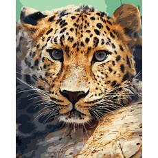 """STK Картина по номерах """"Леопард"""" 40*50 см в коробці, ArtStory   акриловий лак"""